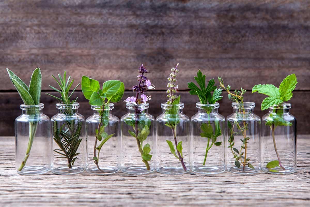ما فائدة نبات السدر للشعر والجسم