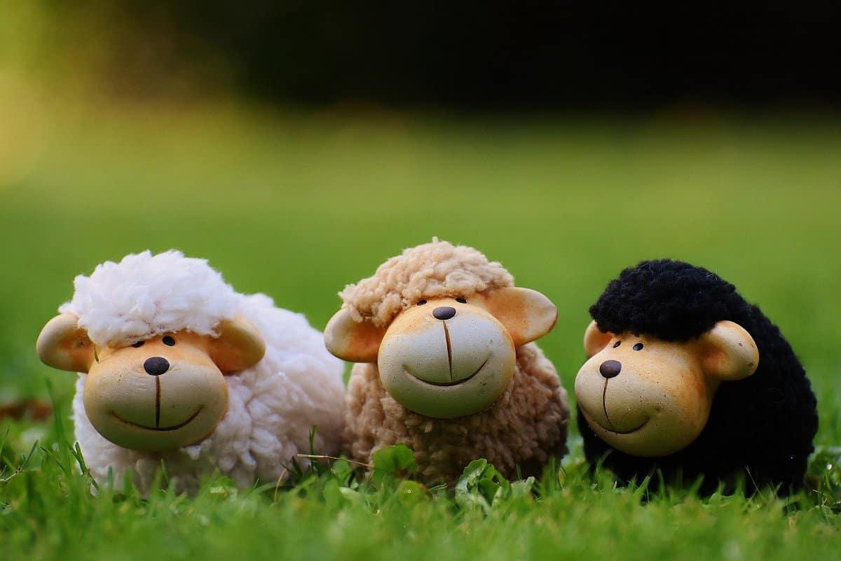 قصص أطفال دور الحضانة (قصة الخرفان الصغير والكبير)