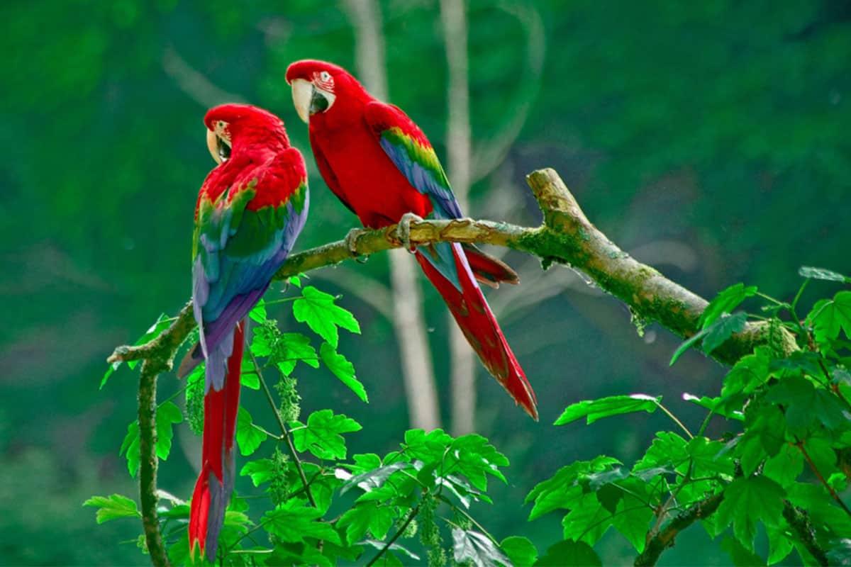 معلومات عن طيور الجنة و انواعها المميزة