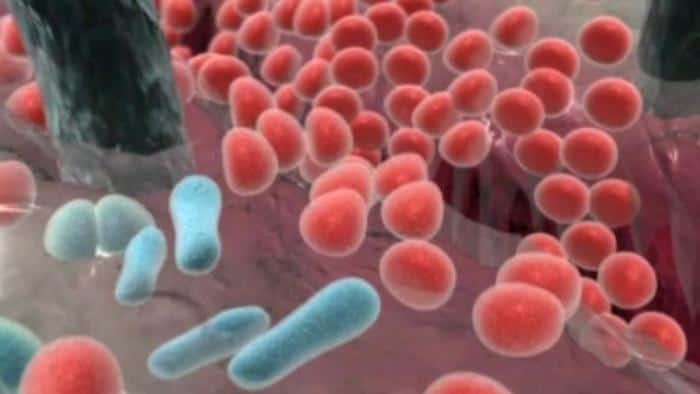 ماذا تنتج بكتيريا e.coli التي تعيش في أمعاء الإنسان